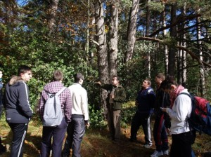 boalares grado superior gestión forestal y del medio natural
